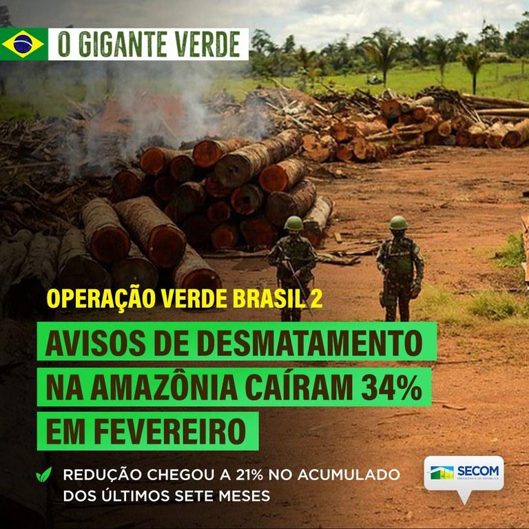 Desmatamento na Amazônia cai 34% em fevereiro